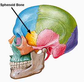 sphenoid bone pain – citybeauty, Human body